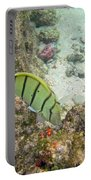 Convict Tang Manini P1060089 Portable Battery Charger