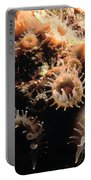 Coral Feeding 5 Portable Battery Charger