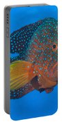 Coral Grouper, Kimbe Bay, Papua New Portable Battery Charger