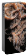 Coral Life Portable Battery Charger