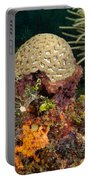 Coral Top Knot Portable Battery Charger