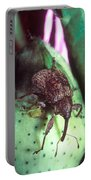 Cotton Boll Weevil Portable Battery Charger