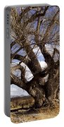 Cottonwood Tree At San Pedro House Portable Battery Charger