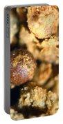Cretaceous Meteorite Portable Battery Charger