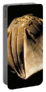 Crinoid Fossil Portable Battery Charger