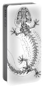 Cryptobranchus, Living Fossil Portable Battery Charger