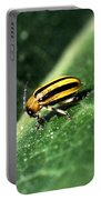 Cucumber Beetle Portable Battery Charger