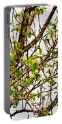 Cucumber Tree Blossoms Portable Battery Charger