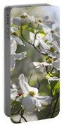 Dazzling Sunlit White Spring Dogwood Blossoms Portable Battery Charger