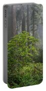 Del Norte Redwoods Portable Battery Charger