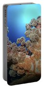 Dendronephthya Soft Coral, Acasta Reef Portable Battery Charger