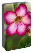 Desert Rose Portable Battery Charger
