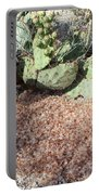 Desert's Collection Of Dried Flowers1 Portable Battery Charger