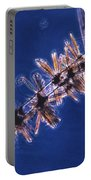 Diatoms Attached To Alga, Lm Portable Battery Charger