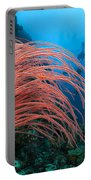 Divers And Whip Coral Portable Battery Charger
