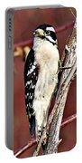 Downy Woodpecker 6 Portable Battery Charger