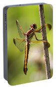 Dragonfly Photo - Yellow Dragon Portable Battery Charger