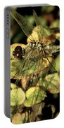 Dragonfly Wingspan Portable Battery Charger