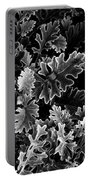 Dusty Miller Bw Portable Battery Charger