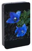 Dwarf Balloon Flower Platycodon Astra Blue  Portable Battery Charger