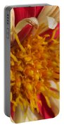 Dwarf Dahlia From The Collarette Dandy Mix Portable Battery Charger