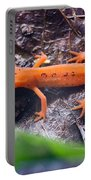 Easterm Newt Nnotophthalmus Viridescens 10 Portable Battery Charger