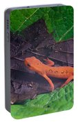 Easterm Newt Nnotophthalmus Viridescens 12 Portable Battery Charger