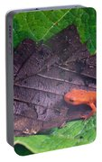 Eastern Newt Notophthalmus Viridescens 26 Portable Battery Charger