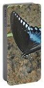 Eastern Tiger Swallowtail 8537 3215 Portable Battery Charger