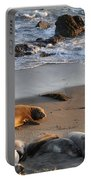 Elephant Seals At Piedras Blancas Portable Battery Charger