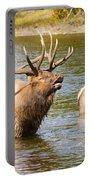 Elk Bugle Estes Lake Colorado Portable Battery Charger
