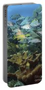 Elkhorn Coral With Schooling Grunts Portable Battery Charger