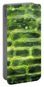 Elodea Leaf Portable Battery Charger