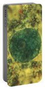 Entamoeba Coli Trophoite Lm Portable Battery Charger by Eric V. Grave
