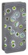 Eudorina Portable Battery Charger