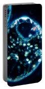 Euglena Viridis Portable Battery Charger