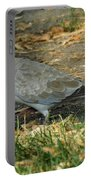 Eurasian Dove Portable Battery Charger