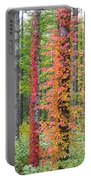 Fall Ivy On The Trees Portable Battery Charger