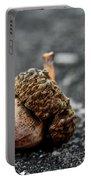 Fallen Acorn  Portable Battery Charger