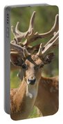 Fallow Deer Dama Dama Stags Portable Battery Charger