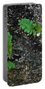 Fern And Coquina Portable Battery Charger