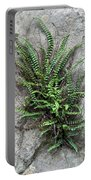 Fern Growing From Crack In Limestone Portable Battery Charger