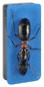 Field Ant Portable Battery Charger