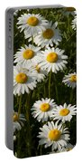 Field Of Oxeye Daisy Wildflowers Portable Battery Charger
