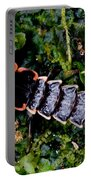 Firefly Larva Portable Battery Charger