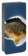 Fish Mount Set 08 C Portable Battery Charger