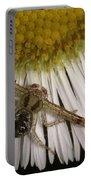 Flower Spider On Fleabane Portable Battery Charger