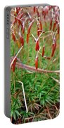 Fruiting Moss - Red And Green Tableau Portable Battery Charger