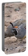 Gambels Quail Pair Portable Battery Charger