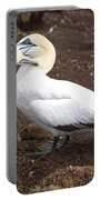 Gannets Showing Mutual Preening Behavior Portable Battery Charger